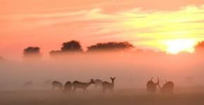 Unique-animals-in-Africa