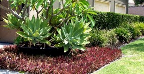 Australian Garden Plants