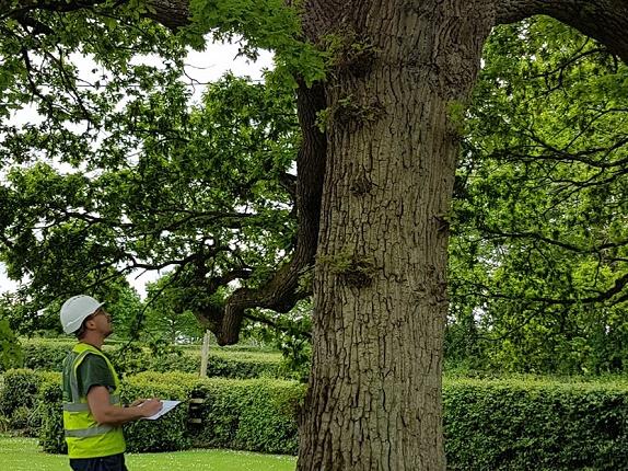 Tree assesment