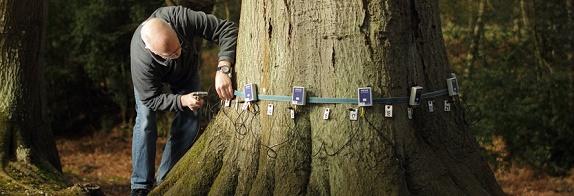 tree-health-management