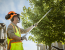 Tree Pruning – Why It Should Be Done by an Arborist