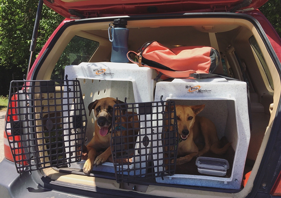 dog kennel for travelling