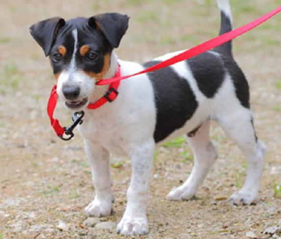 Dog Chew Collar
