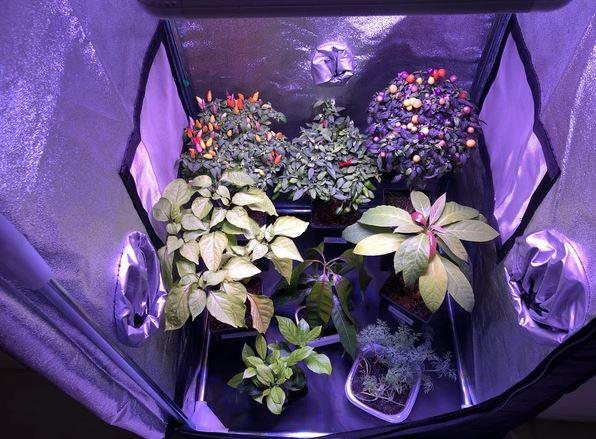 Grow tent indoor
