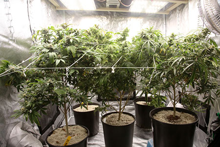 growing tent inside