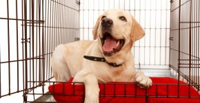 happy dog in crate