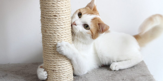 cat and its scratching post