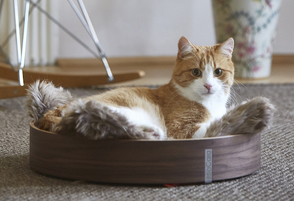 cat laying in its bed