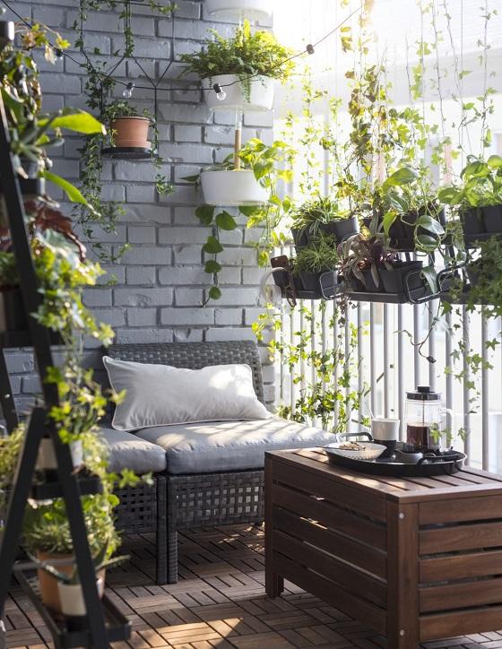 plants on a balcony